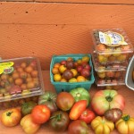 Enjoy late summer harvest and get your fall garden ready!