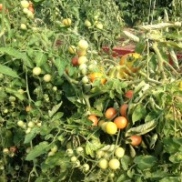 Nice Roots Farm Garden Workshops 2015